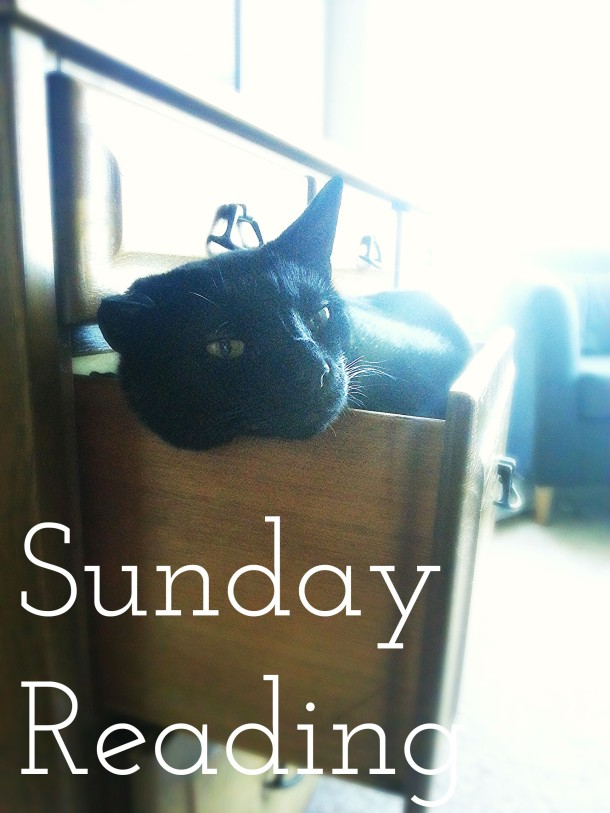 cat-in-drawer-sunday-reading